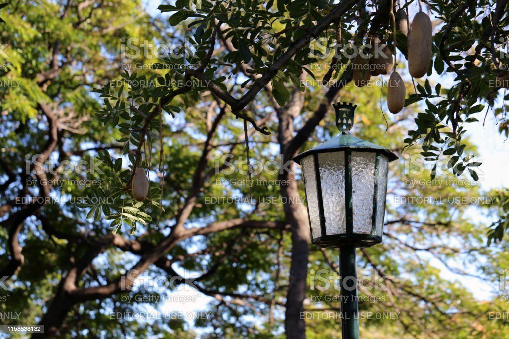 Beautiful lamp in a park located in Funchal, Madeira, Portugal...