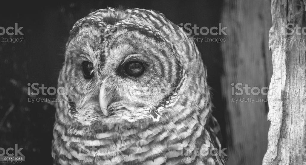 Close-up of an Owl stock photo