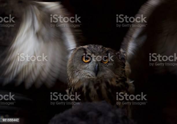 Closeup of an owl picture id931555442?b=1&k=6&m=931555442&s=612x612&h=kepx6sxlyy64omy9px0czy6h92jf30hvjx3ec w38tg=