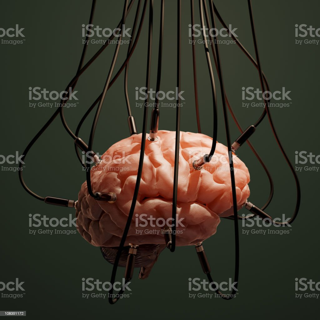 Close-up of animal brain connected with wires stock photo