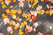 Detail of a boardwalk covered in autumn fallen leaves. Useful as autumn background.