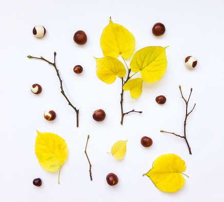 Closeup of autumn yellow leaves, chestnuts, branches. Top view
