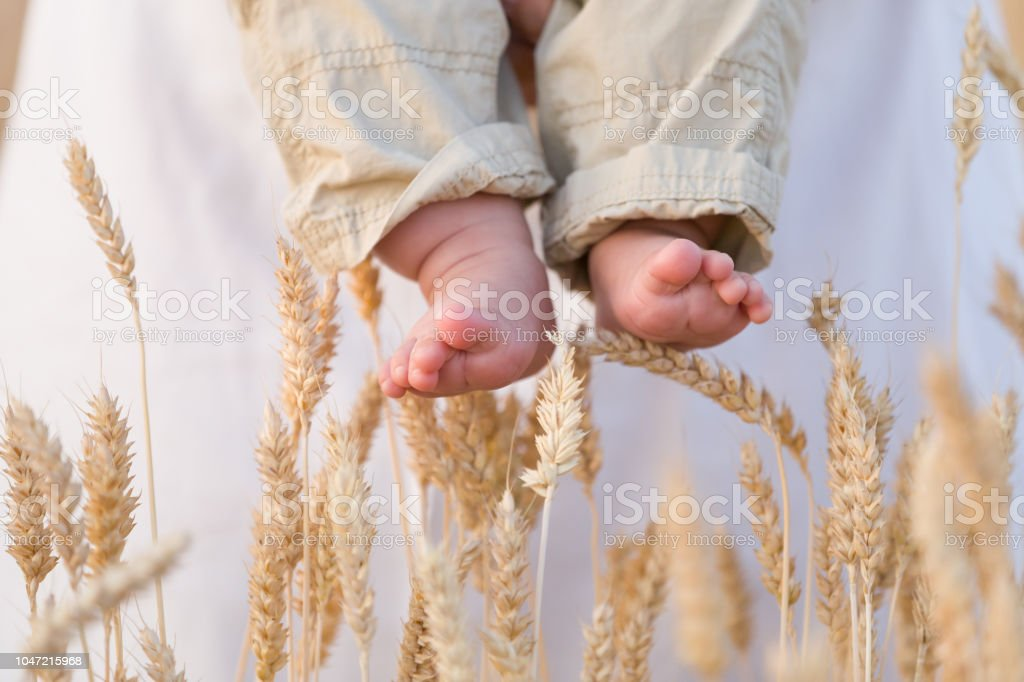 Closeup of baby's bare feet with ears of wheat as background. Woman holding little baby in the field on a sunny summer day. Outdoors. – zdjęcie
