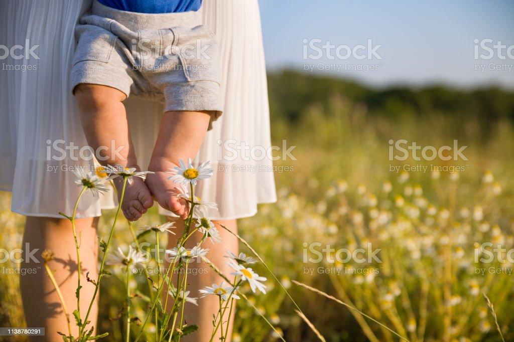 Bebeğin çıplak ayakları closeup. Küçük bebek oğlunu güneşli yaz gününde vahşi çiçekler çayırında tutan genç anne. Mutlu bir aile. Parkta papatya alanında yürüyen bir çocuk ile kadın. Açık havada. stok fotoğrafı