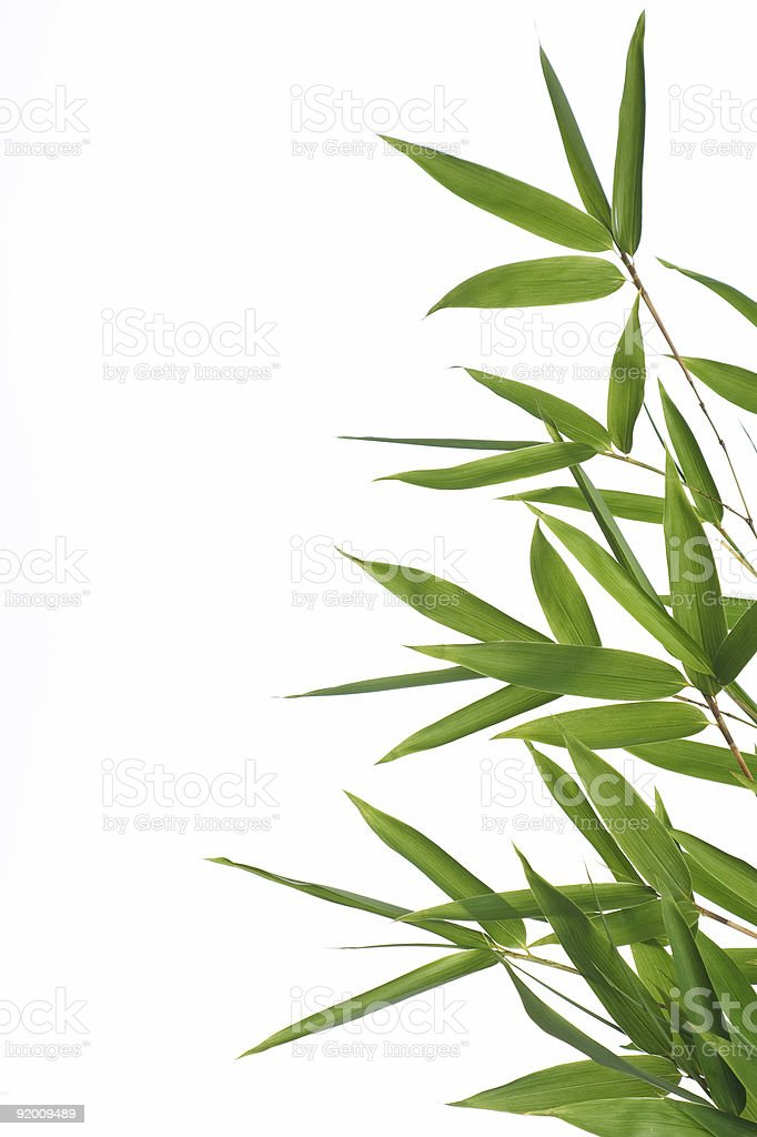Close-up of bamboo leaves isolated on white background stock photo