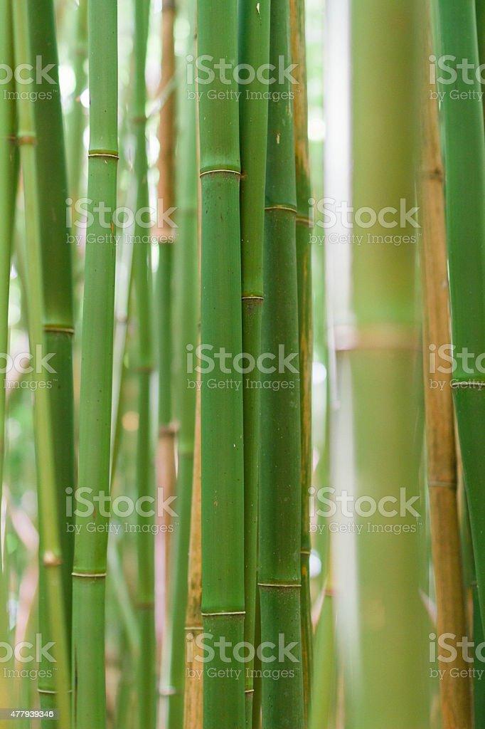 Close-up of bamboo on Pipiwai Trail stock photo