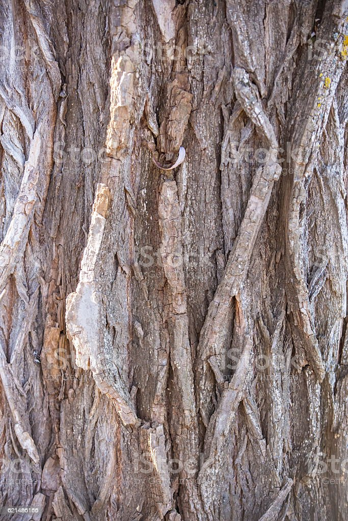 Close-Up of Bark On Large Tree Trunk foto stock royalty-free