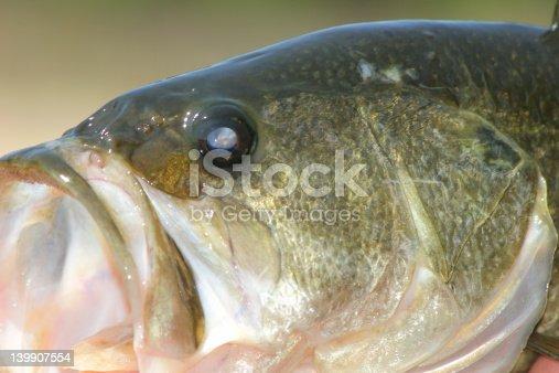 istock Close-Up of Bass 139907554