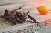istock Close-up of bat face 1030702358