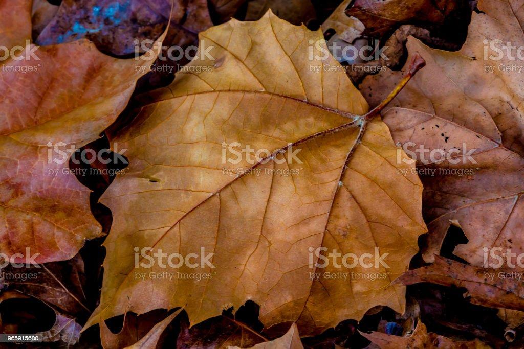 Closeup of Beautiful Intricate Fall Foliage. - Royalty-free Autumn Stock Photo