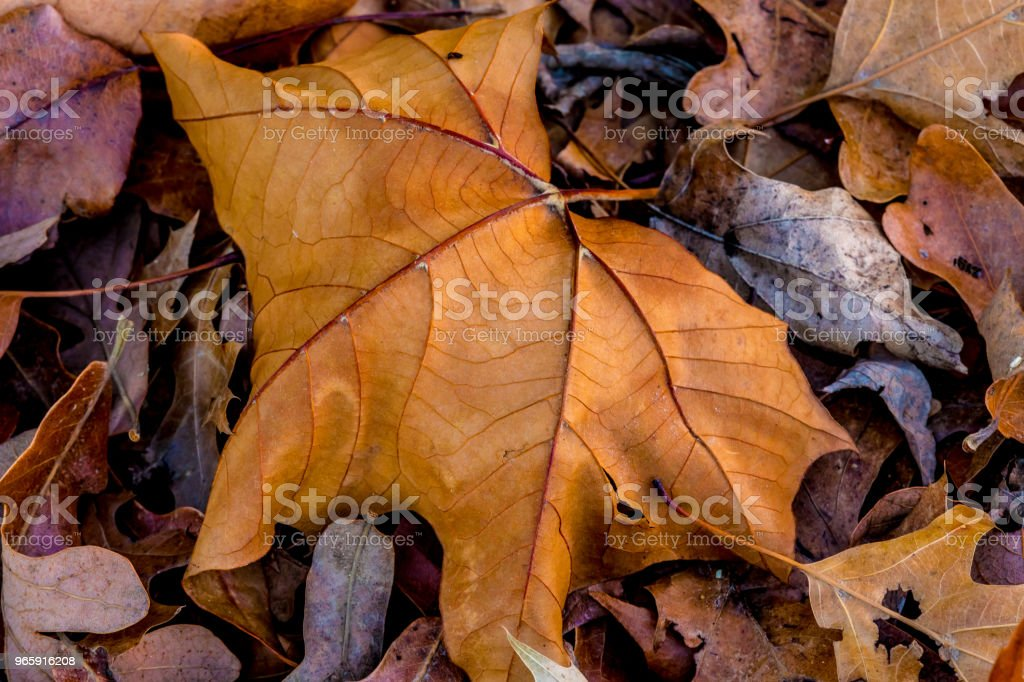 Close-up of Beautiful Intricate Fall Foliage. - Royalty-free Autumn Stock Photo