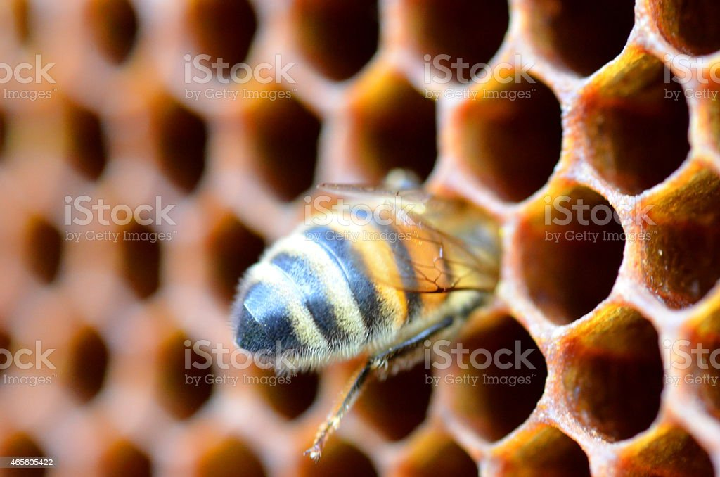 closeup of bee on honeycomb in apiary stock photo