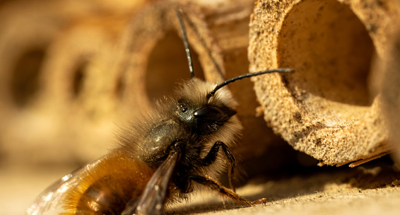 Close-up of bee pollinationg of a wood