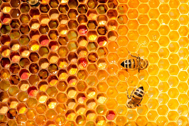 closeup of bees on honeycomb in apiary stock photo