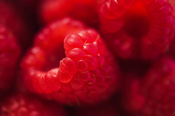close-up of berries raspberries  macrophoto with strobe light - framboesa imagens e fotografias de stock