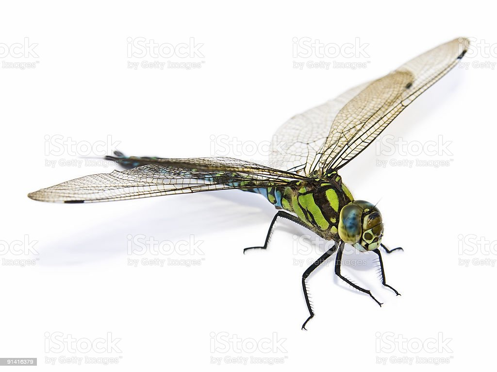 Closeup of big green dragonfly isolated on white background royalty-free stock photo