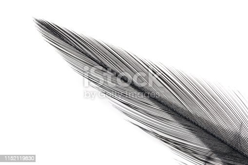 istock Close-up of Black feather isolated on white 1152119830