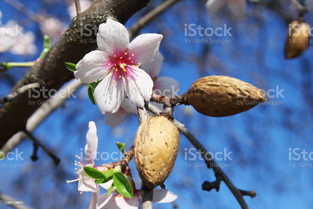 Close-up of blossoms in a tree stock photo