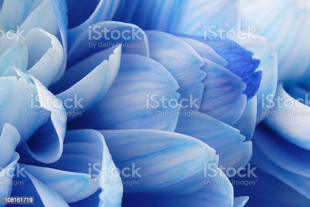 Closeup of blue flower petals picture id108161719?b=1&k=6&m=108161719&s=612x612&h=waau4fpgevwmliiaxsg3wpigdajkacg9bmspn1gmhxo=