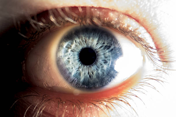 Close-up of blue human eye Close-up of blue human eye iris eye stock pictures, royalty-free photos & images