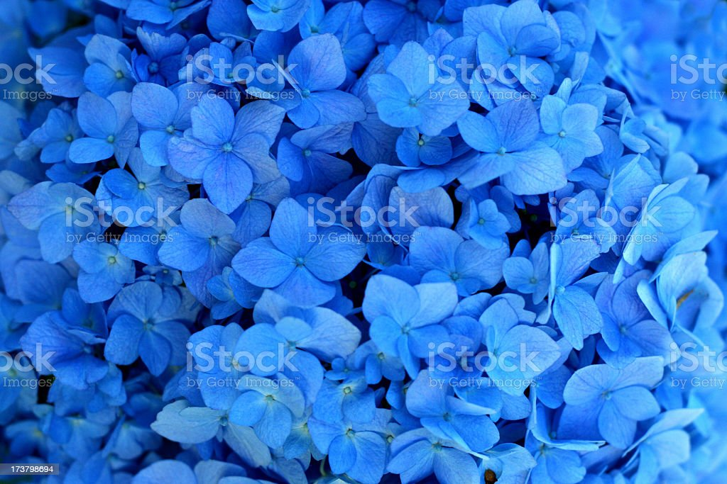 Closeup of blue wedding flowers stock photo