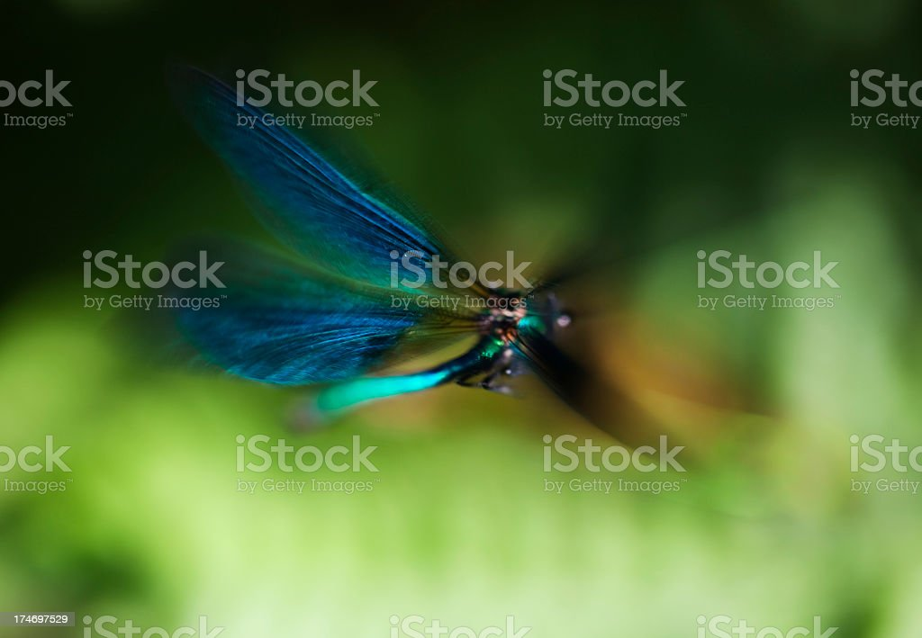 Close-up of blurred blue-winged dragonfly flying over greens royalty-free stock photo