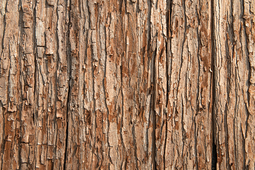 Close-up of brown tree bark texture