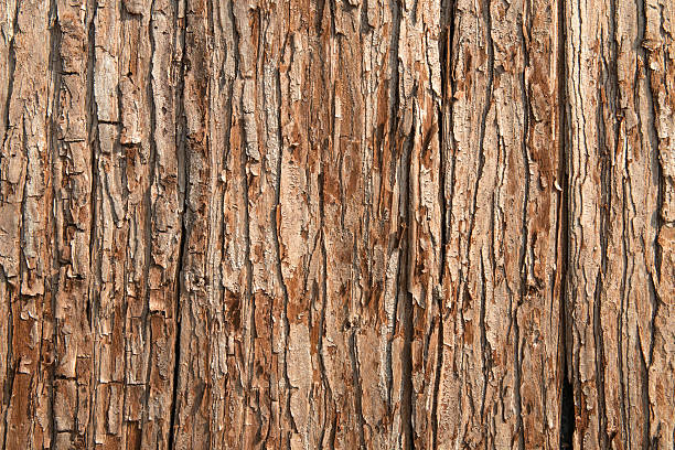 Close-up of brown tree bark texture stock photo