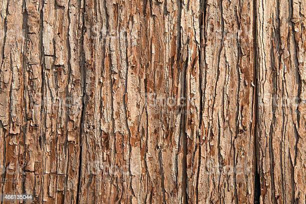 Photo of Close-up of brown tree bark texture