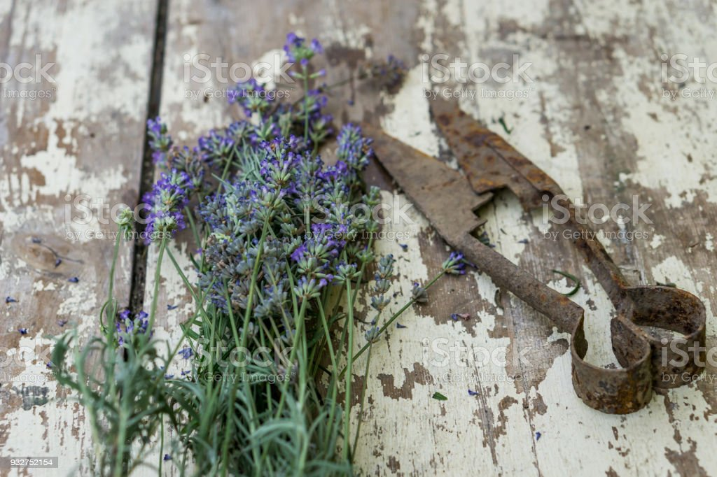 Close-up of bunch lavender on a white rustic table. Concept nostalgia and vintige style. Shallow depth of focus. stock photo