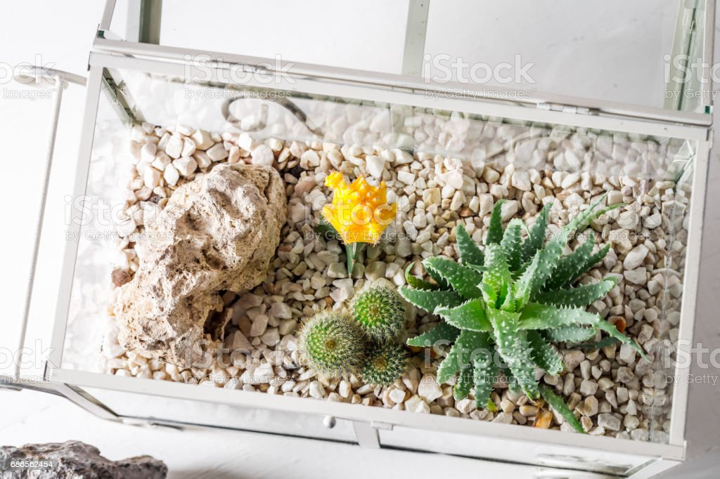 Closeup of cactus in a glass terrarium with self ecosystem royalty-free stock photo