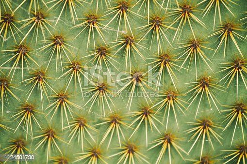 Close-up of cactus spikes in Lanzarote, Canary Islands