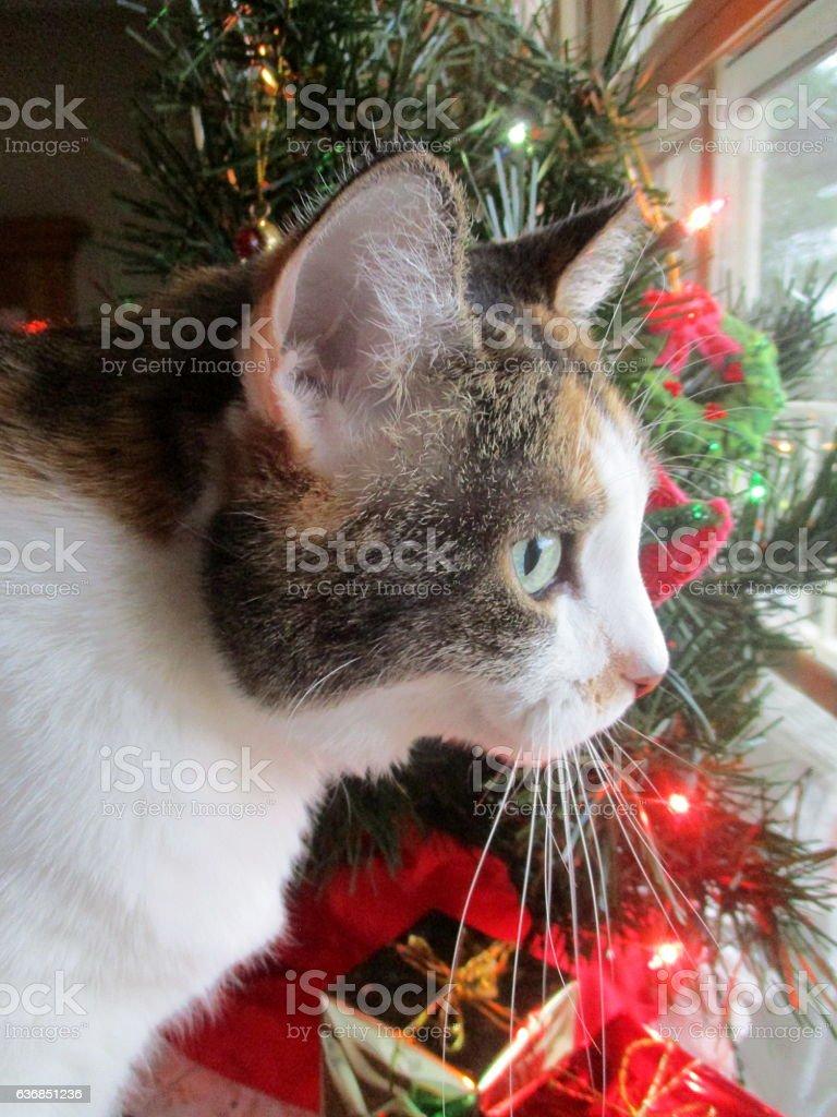 Close-up of Calico Cat Near Christmas Tree stock photo