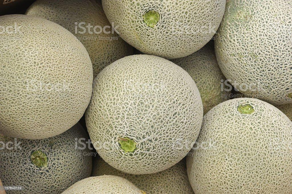 Close-up of Cantaloupes Ready for Shipping stock photo