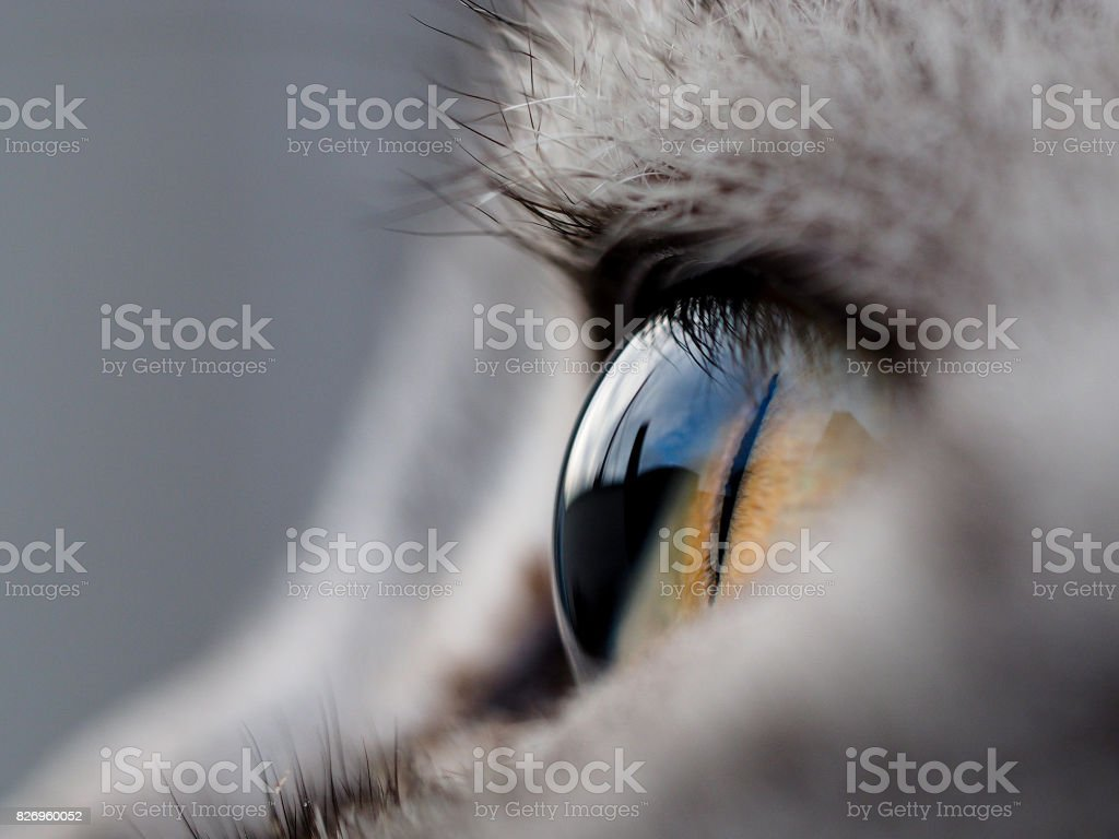 close-up of cat eye stock photo