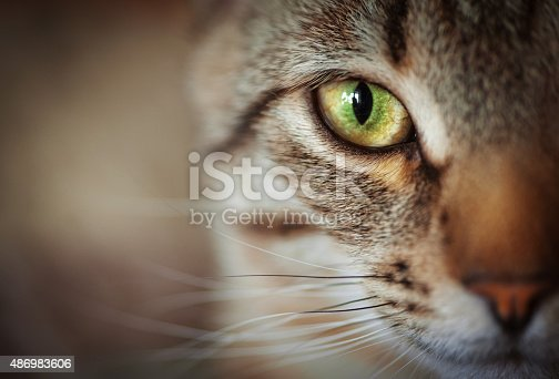 Closeup of tabby cat face. Fauna background