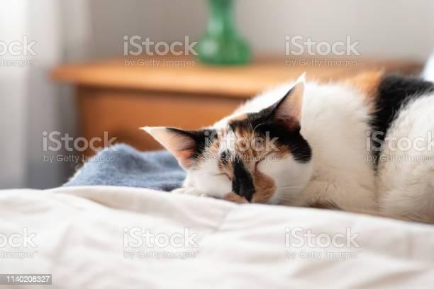 Closeup of cat sleeping on the bed in warm sunlight picture id1140208327?b=1&k=6&m=1140208327&s=612x612&h=g dbl26hzfkogjglhianqj8o3xrcekxapg1wfpfvpi8=