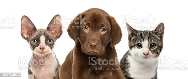 Closeup of cats and dog isolated on white picture id859703970?b=1&k=6&m=859703970&s=612x612&h=f bltwhidakfcwslw lcz4x w9t9 sngidcfrcpt4fi=