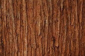 Close-up of cedar tree texture background