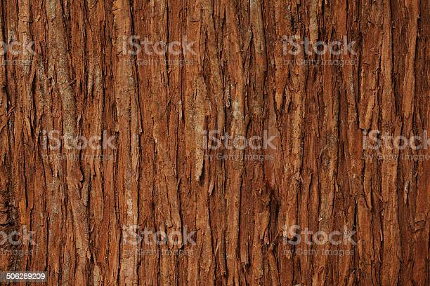 Photo of Close-up of cedar tree texture background