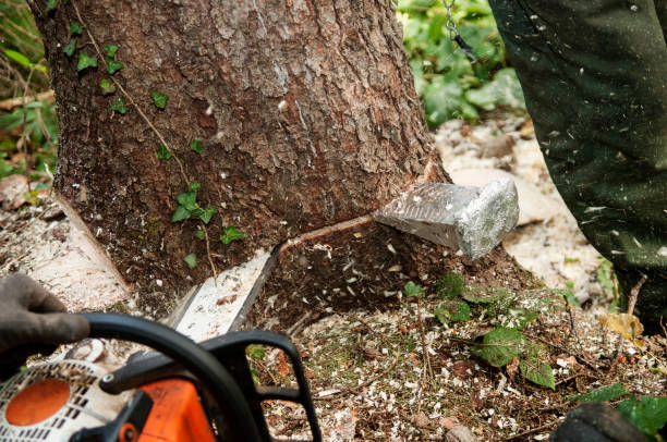 closeup of chopping down a tree with chainsaw - tree surgeon stock photos and pictures