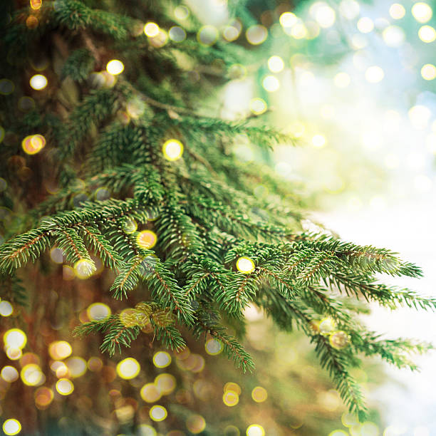 closeup of christmas-tree - christmas tree stock photos and pictures