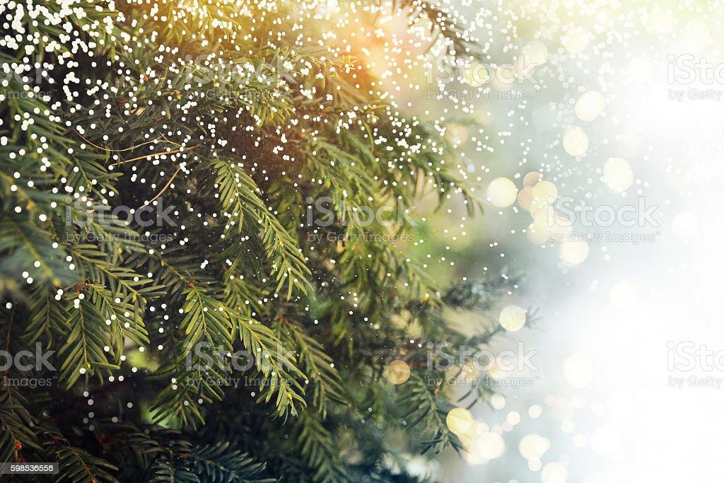Gros plan d'arbre de Noël photo libre de droits