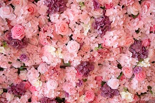 close up of colorful roses backdrop wall.