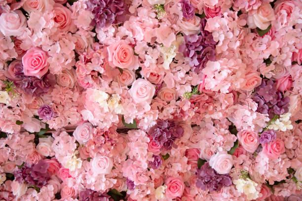 zbliżenie kolorowe róże ściany tła. - różowy zdjęcia i obrazy z banku zdjęć