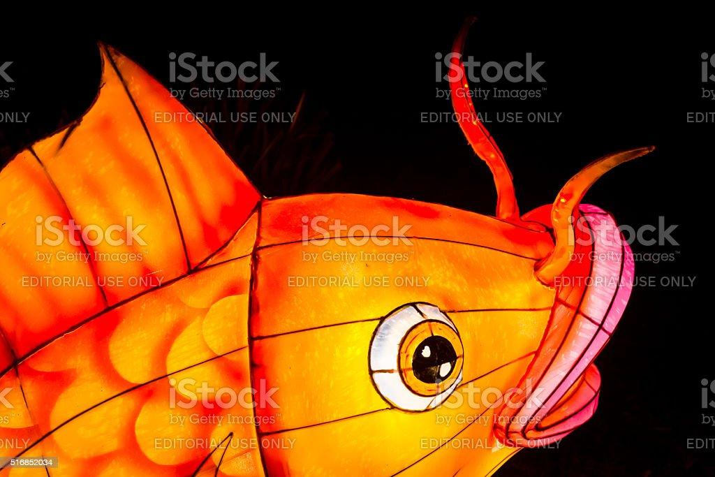 Closeup of coy fish lantern stock photo
