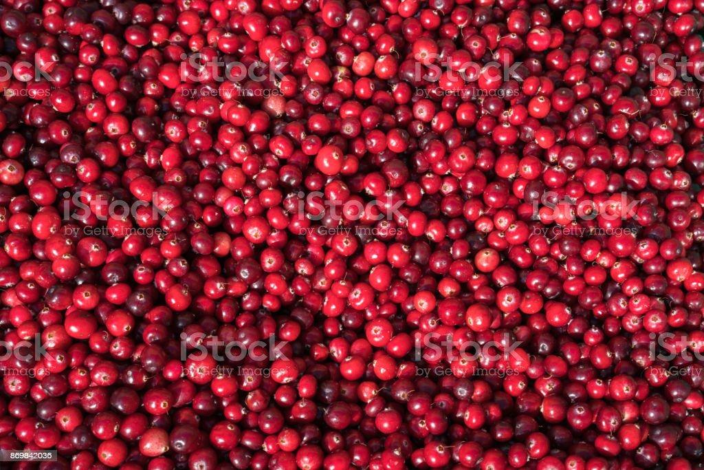 Closeup of cranberries stock photo