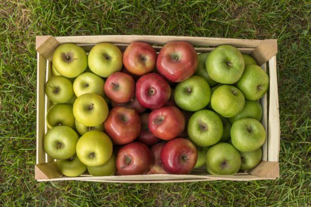gros plan de caisse avec des pommes fraîches sur l'herbe: gala, golden delicious, granny smith - golden photos et images de collection