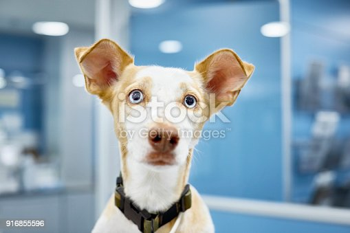 Close-up of cute dog at veterinary clinic. Portrait of sick domestic animal. Animal is wearing pet collar.