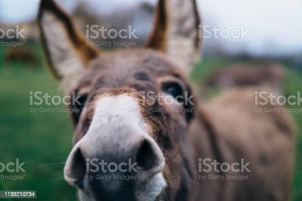 Photo of Close-up of cute donkey